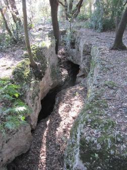 El bosc de les Estunes 2